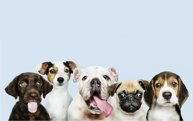 Dogfooding là sử dụng chính sản phẩm của chính mình tạo ra